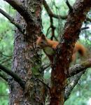 Wiewiureczka